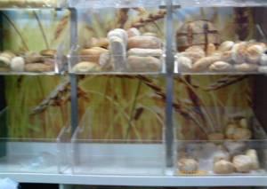Alcune tipologie di pane appena sfornate.