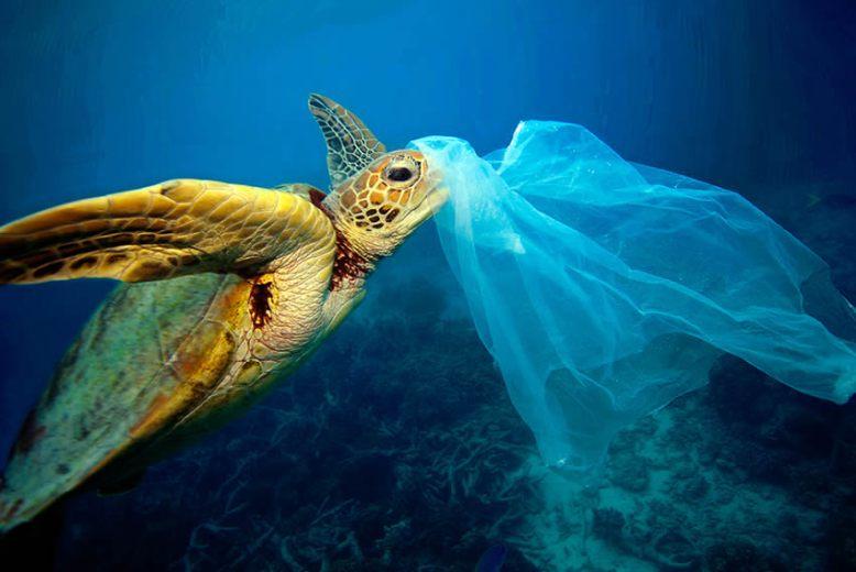 46-tortue-sac-plastique-australie.jpg