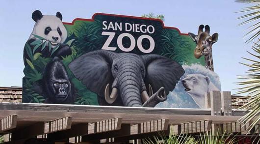 zoo-san-diego.jpg